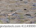 鷸 水雞 鳥兒 41149990
