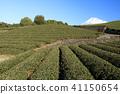 절경 풍경 (시즈오카 현 차 농장 가을) 41150654