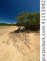 紅樹屬植物 海岸 海濱 41153982