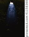firefly 41156360
