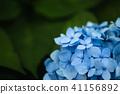 花朵 花卉 花 41156892