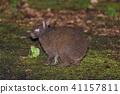 สัตว์,ภาพวาดมือ สัตว์,กระต่าย 41157811