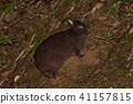 สัตว์,ภาพวาดมือ สัตว์,กระต่าย 41157815
