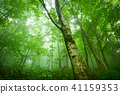 World Heritage Shirakami Mountains Forest 41159353
