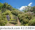 【이즈 반도] 쾌청 · 하늘 · 초여름의 고원 풍경 [이즈 산 능선 보도 · 오뚝이 산 주변] 41159894