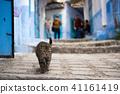 모로코 쉐프 샤우 엔의 고양이 41161419