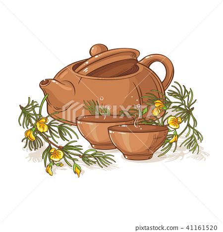 rooibos tea illustration 41161520