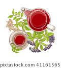 elderberry, berry, tea 41161565