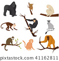 Flat vector set of 9 species of monkeys. Wild animals. Elements for promo poster or banner of zoo 41162811