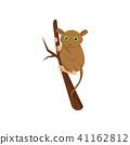 tarsier animal vector 41162812