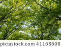 พืชสีเขียว,ผักใบ,ต้นไม้ 41168608