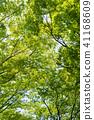 พืชสีเขียว,ผักใบ,ต้นไม้ 41168609