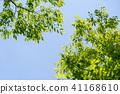 พืชสีเขียว,ผักใบ,ต้นไม้ 41168610