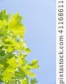 ผักใบ,ไม้,โรงงาน 41168611