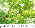 พืชสีเขียว,ผักใบ,ต้นไม้ 41168614