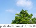 พืชสีเขียว,ผักใบ,ต้นไม้ 41168638