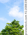 พืชสีเขียว,ผักใบ,ต้นไม้ 41168639