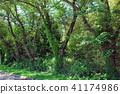 tree, wood, arboreal 41174986