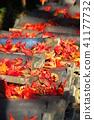 maple, yellow leafe, fallen leaves 41177732