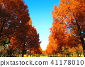 autumnal, maple, yellow leafe 41178010