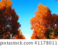 autumnal, maple, yellow leafe 41178011