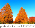 autumnal, maple, yellow leafe 41178012