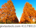 autumnal, maple, yellow leafe 41178013