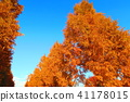 autumnal, maple, yellow leafe 41178015