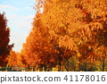 autumnal, maple, yellow leafe 41178016
