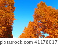 autumnal, maple, yellow leafe 41178017