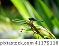 곤충, 벌레, 잠자리 41179116