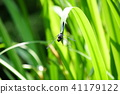 곤충, 벌레, 잠자리 41179122