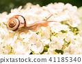 수국과 달팽이 · 장마 이미지 41185340
