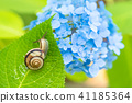 繡球花 蝸牛 花朵 41185364