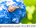 繡球花 蝸牛 花朵 41185394