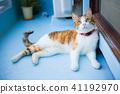 Mikane猫,当休息,当观看鸟时 41192970