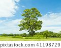 wood, big tree, arboreal 41198729
