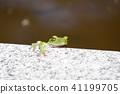 สัตว์ครึ่งบกครึ่งน้ำ,สัตว์,ภาพวาดมือ สัตว์ 41199705