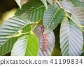 곤충, 벌레, 나방 41199834