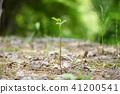 식물, 싹, 새싹 41200541