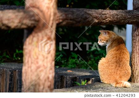 도둑 고양이 고양이 공원 산책 41204293