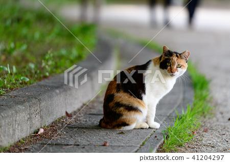 도둑 고양이 고양이 공원 산책 41204297