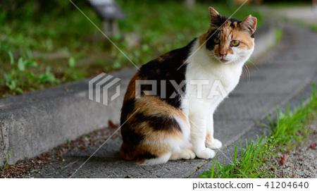 도둑 고양이 고양이 공원 산책 41204640