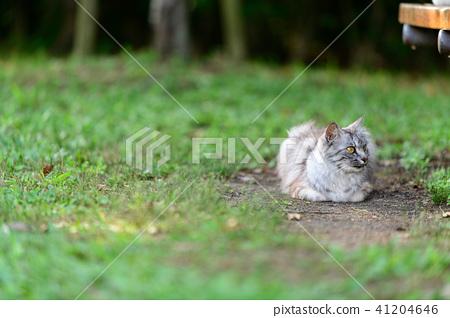 도둑 고양이 고양이 공원 산책 41204646