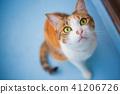 猫 猫咪 小猫 41206726