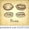 botany, etching, nut 41207258