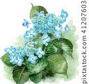 hydrangea, bloom, blossom 41207603