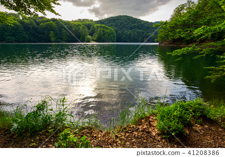 Morske Oko lake among primeval beech forest 41208386