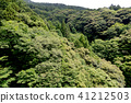 정글 41212503