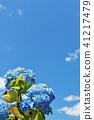 藍天和白色雲彩和八仙花屬 41217479